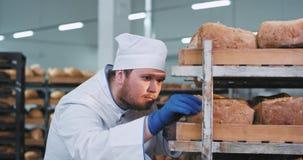 Charismatischer fetter Bäckermann, der durch die Regale und das organische perfekte Brot des Brotes vereinbaren sehr sorgfältig s stock video footage