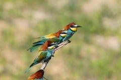 Charla de los pájaros Imagenes de archivo