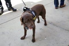 charla del perro de la oficina K-9 del NYPDCounter-terrorismo durante la primera jornada Yan Imagen de archivo
