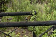 Charla inarticulada entre el pájaro dos en área de la reserva de naturaleza de Kwazulu Natal del castillo de Giants foto de archivo libre de regalías