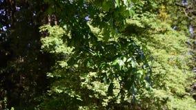 Charlas del jabón en el aire contra las hojas verdes metrajes