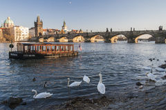 Charles Bridge à Prague Images libres de droits