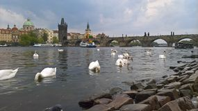 Charles Bridge Stock Afbeelding