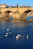 Charles Bridge con la riflessione di mattina Fotografia Stock