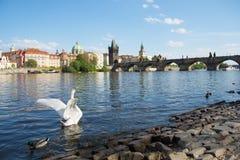 Charles Bridge - Praag, Tsjechische Republiek royalty-vrije stock foto