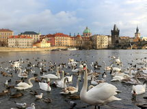 Charles Bridge in Prag Stockfotos