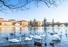 Charles bridge in prague with birds Stock Photos