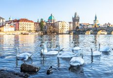 Charles bridge in prague with birds Royalty Free Stock Photos