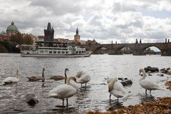The Charles Bridge Royalty Free Stock Images