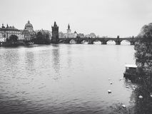 Charles Bridge. Swans and the Vltava River Royalty Free Stock Photography