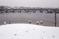Charles bridge in the winter. Prague and this bridge  is in Unesco world heritage list Royalty Free Stock Photo