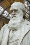 Charles Darwin - museo de la historia natural - Londres imagen de archivo