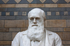 Charles Darwin Primo Piano. Taken in the museum of natural sciences in London Royalty Free Stock Photo