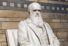 Charles Darwin Statue in the Natural History Museum Stock Images