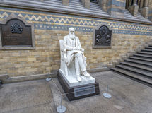 Charles Darwin Statue in the Natural History Museum Royalty Free Stock Image