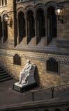 Charles Darwin Statue nel museo di storia naturale Fotografia Stock Libera da Diritti