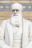 Charles Darwin white marble statue bust in London Royalty Free Stock Image