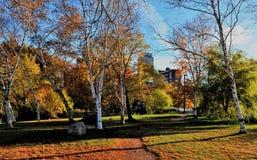 Charles River Esplanade Royalty-vrije Stock Afbeeldingen