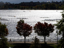 Charles River Rowers Stock Images