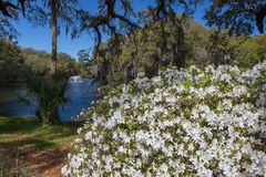 Charles Towne Landing Historic Site-Zuid-Carolina stock foto's