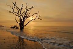 Charleston, bahía de la botánica de la playa del SC Boneyard fotografía de archivo libre de regalías