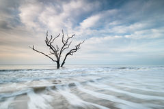 Charleston Boneyard Beach Edisto Island Lone Tree Atlantic Ocean Stock Photography