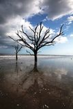 Charleston Boneyard Beach Forest Botany Bay SC. When sea levels rise and sands shift, maritime forests fall to the elements.  At Botany Bay Plantation near Stock Photos