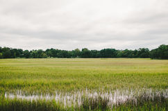 Charleston Marsh Royalty Free Stock Image