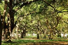 Charleston, Południowa Karolina - zdjęcie royalty free