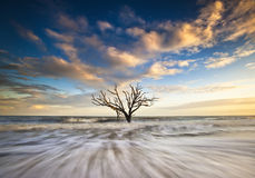 Charleston SC Botany Bay Edisto Island Carolinas Royalty Free Stock Image