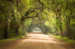 Charleston Sc-Schotterweg-Waldtiefer Süden-Moos Lizenzfreie Stockfotografie