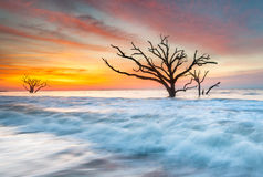 Charleston South Carolina Edisto Island Tree in Atlantic Ocean Royalty Free Stock Images