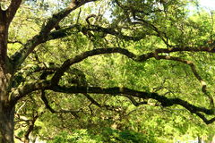 Charleston - South Carolina Royalty Free Stock Image