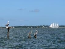Charleston South Carolina-zeegezicht met pelikanen bij zich het opstapelen en een zeilboot in de afstand Stock Fotografie