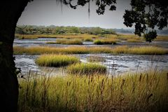 Charleston Swamp Environment. A swamp with wild grass in Charleston, South Carolina stock photo