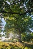 Charleville森林 免版税图库摄影