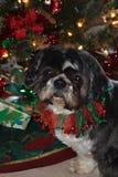 Charley à Noël Images libres de droits
