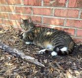 Charlie Cat Lying In Sun Stock Image