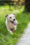 Charlie dog Stock Image