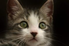 Charlie le chaton photographie stock