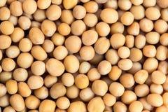 Charlock seeds. Macro photo of charlock seeds. Closeup 1:1 Royalty Free Stock Photo
