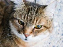 Charlotte die Katze Stockbild
