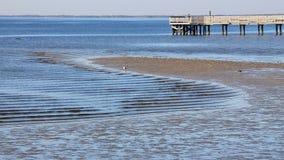 Charlotte Harbor Tide Line Fotografía de archivo