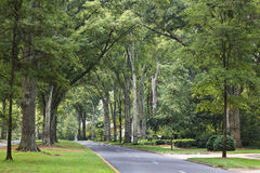 Charlotte North Carolina Queens Road West. Queens Road West in Myers Park in the summer with tall Willow Oaks Stock Photo