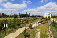 Charlotte Skyline from Midtown Park stock photography