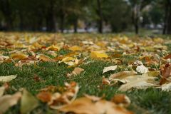 The charm of autumn, grass and yellow leaves Royalty Free Stock Photography
