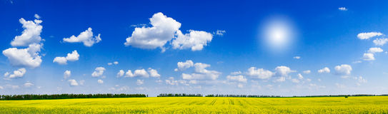 Charm rapefield and cloudscape with sunbeams. Royalty Free Stock Photo