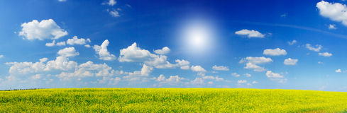Charm rapefield and cloudscape with sunbeams. Stock Photos