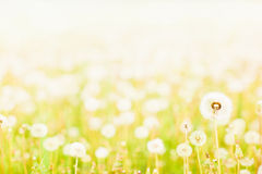 Charm of summer Stock Photography