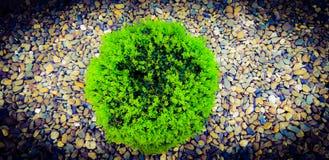 Charma den gröna busken med stenbakgrund! fotografering för bildbyråer